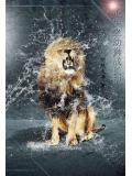 重生之幼獅成長記